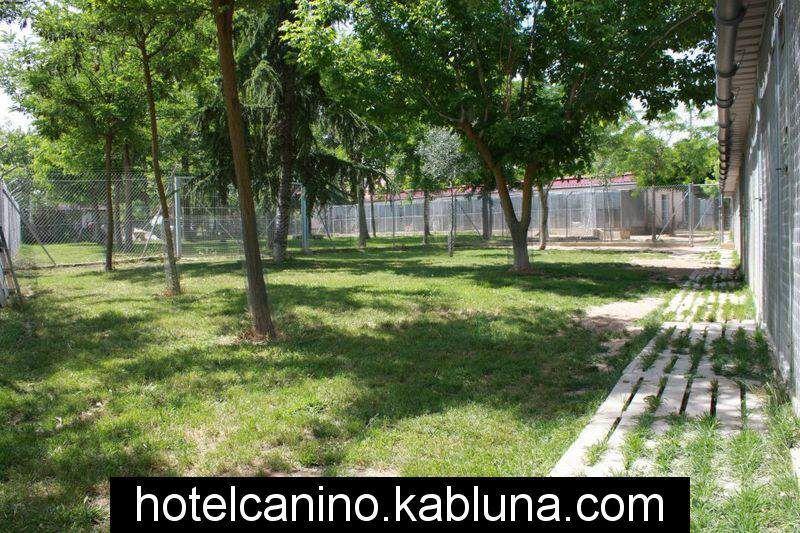 Hotel canino kabluna zonas recreo 3