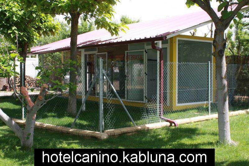 Hotel canino kabluna zonas recreo 6