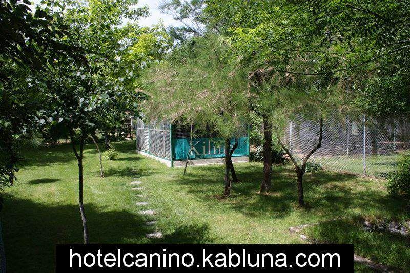 Hotel canino kabluna zonas recreo 7